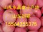 大量供应红富士苹果
