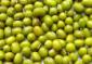 三低进口绿豆
