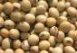 三低进口黄大豆